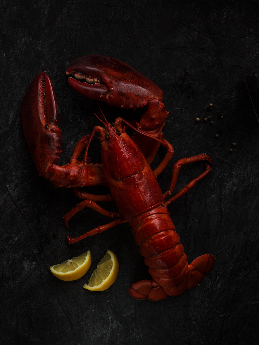 MSC-lobster-dark-gabetoth